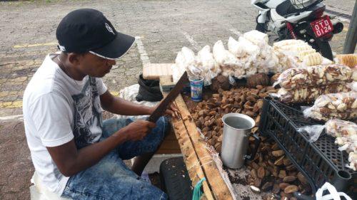 Homme coupant des noix du Brésil