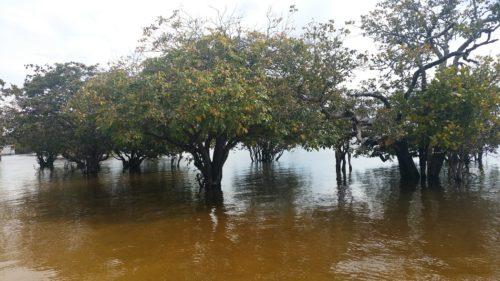 Arbres dans l'eau à Santarem