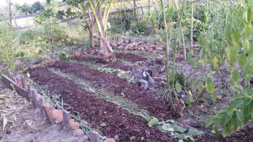 Rangées faites dans le jardin