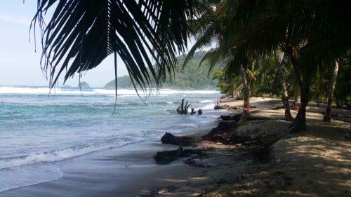 Plage à l'ombre de palmiers
