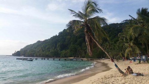 Un cocotier penché sur une plage