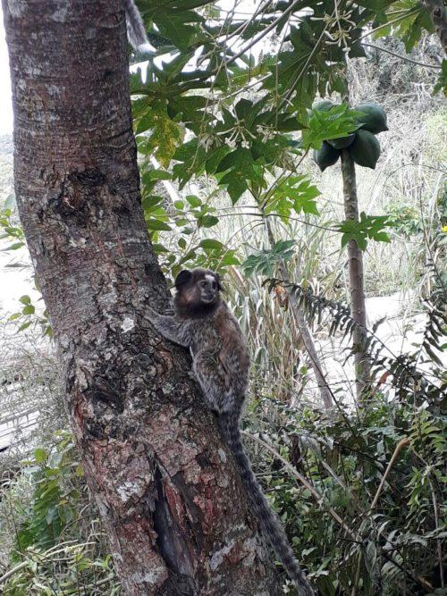 Petit singe sur une arbre