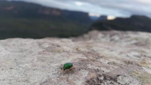 Petit insecte vert sur une pierre