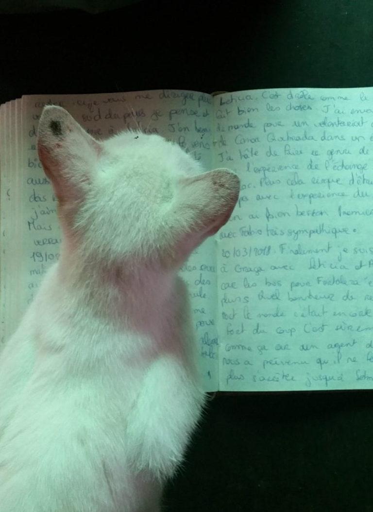 Chat couché sur mon carnet de voyage