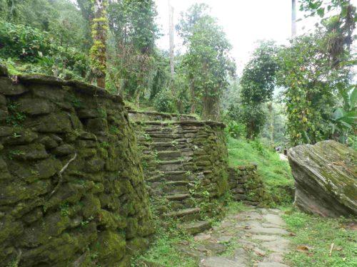 Mur en pierre recouvert de mousse