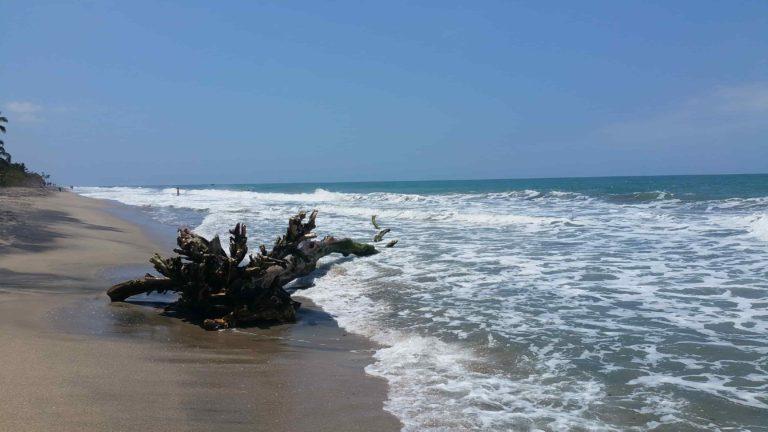 Tronc d'arbre sur la plage de Palomino