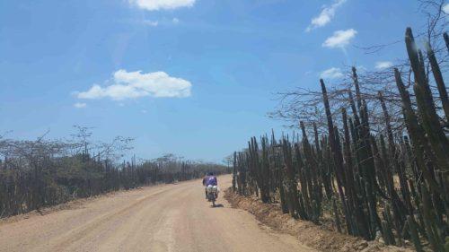 Cyclistes sur la piste bordée de cactus
