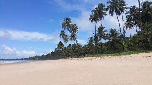 Plage de Japaratinga bordée de palmiers