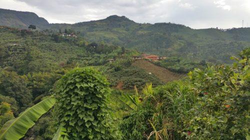 Paysage de collines verdoyantes