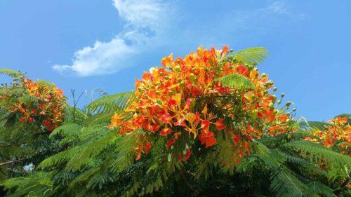 Fleur d'un arbre