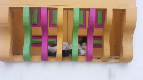 Chat dormant entre les volets et barrière colorés