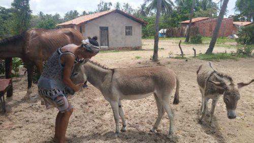 Avec les ânes
