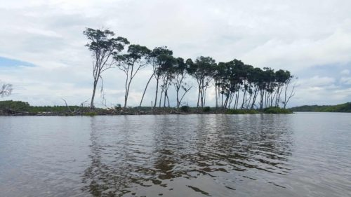Arbres au bord de la rivière