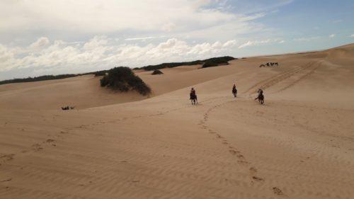 Chevaux sur la dune