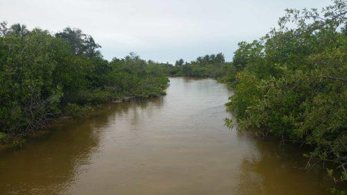 Rivière bordée de végétation