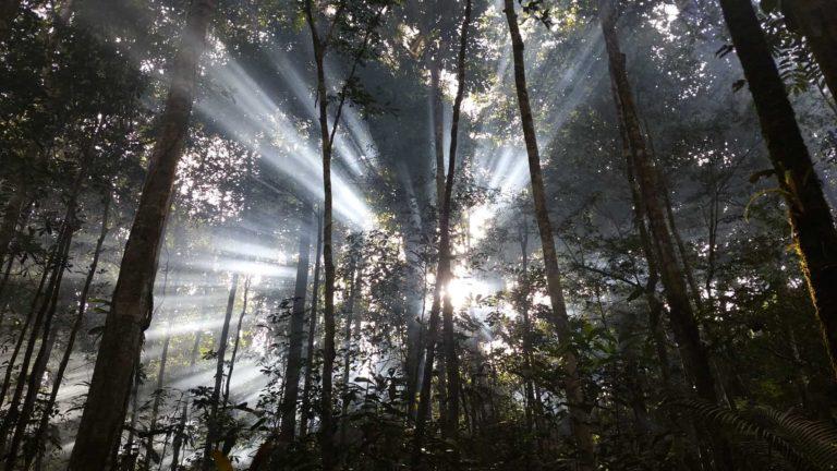 Rayon du soleil passant à travers la forêt