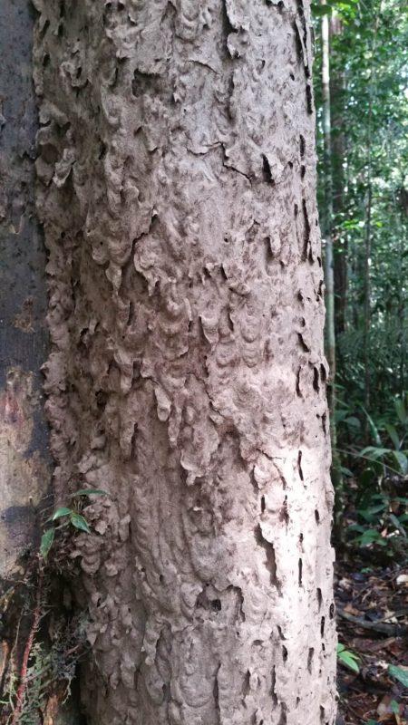 Termites sur un arbre