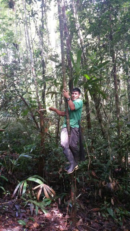 Guide escaladant un arbre