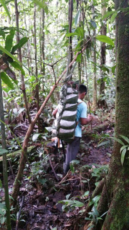 Guide marchant dans la jungle