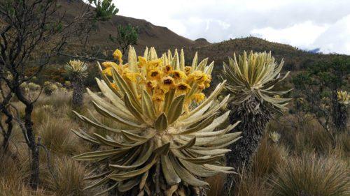 Plante avec fleurs jaunes
