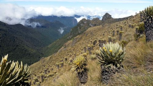 Champ de cactus Frailejones au milieu des montagnes