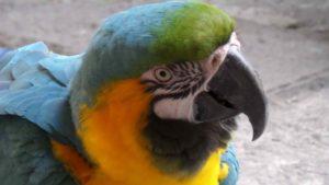 Perroquet au musée