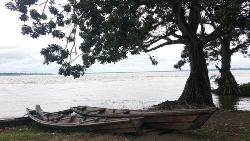 Barque en bois sous un arbre
