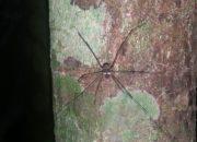 Petite araignée au longues pattes sur un tronc
