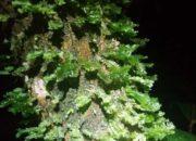 Végétation humide sur un arbre