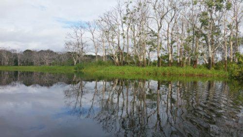 Arbres se reflétant dans l'eau