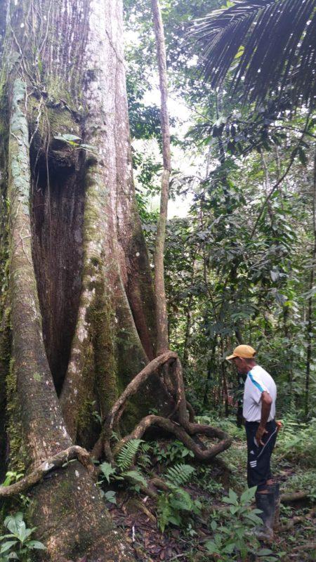 Guide devant un arbre