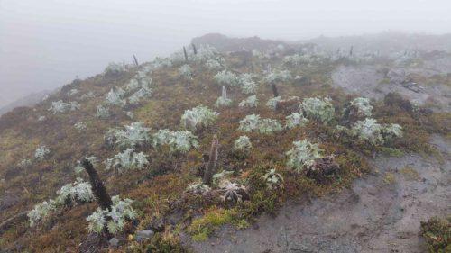 La végétation du volcan sous la brume