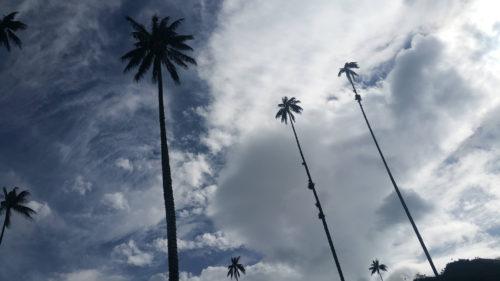 Hauts palmiers