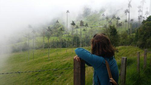 Palmiers dans les nuages