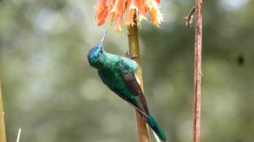 Colibri sur une tige de fleur