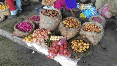 Pommes de terre roses, noires et blanches dans des sacs