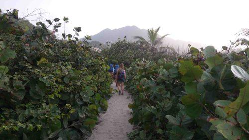 Chemin de sable entre la végétation