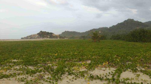 Terrain vague rempli de végétation basse