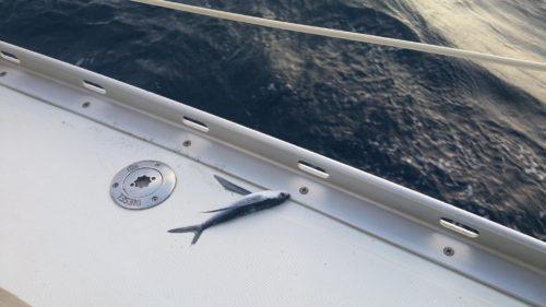 Poisson-volant sur le bateau