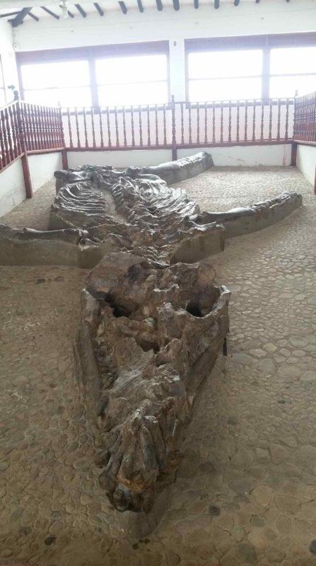 Squelette de kronosaure