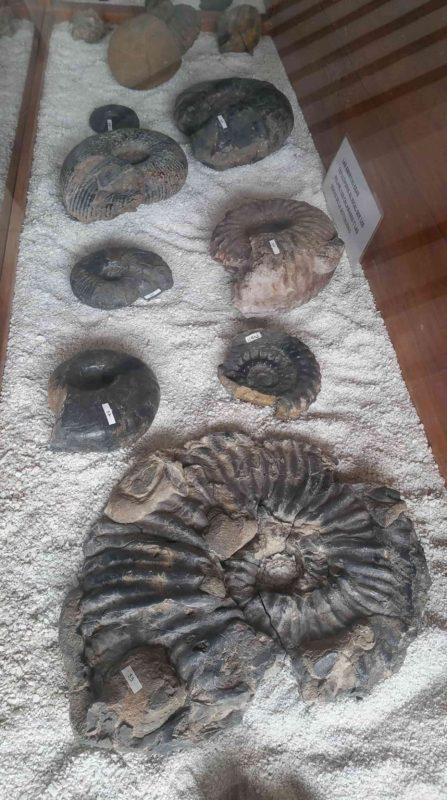 Fossiles du musée